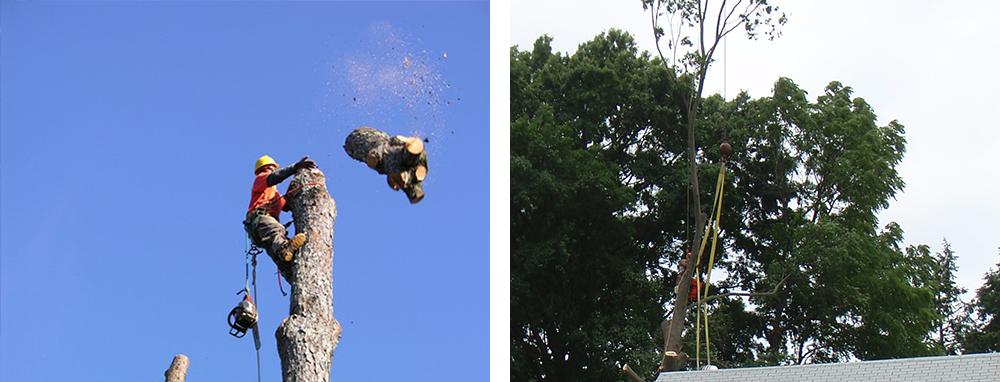 Tree Removal in Richmond VA