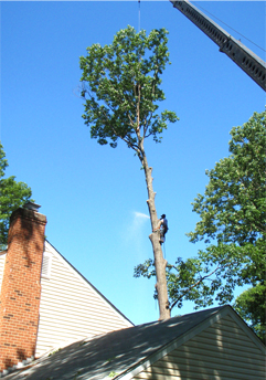 Tree Removal Richmond Va
