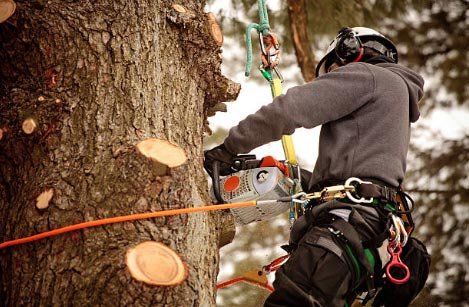 Arborist doing tree service in Richmond Va