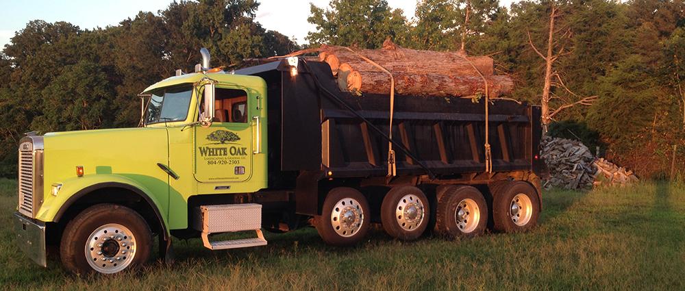 White Oak Tree Removal Richmond VA